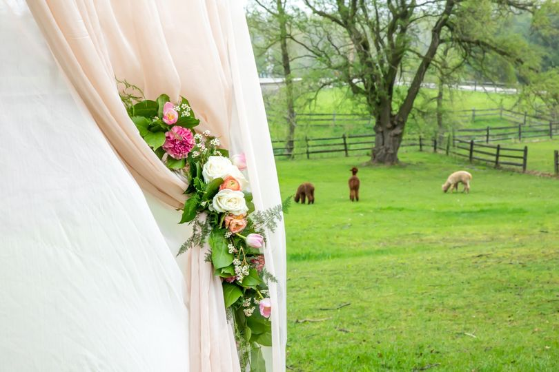 Elegant alpaca wedding