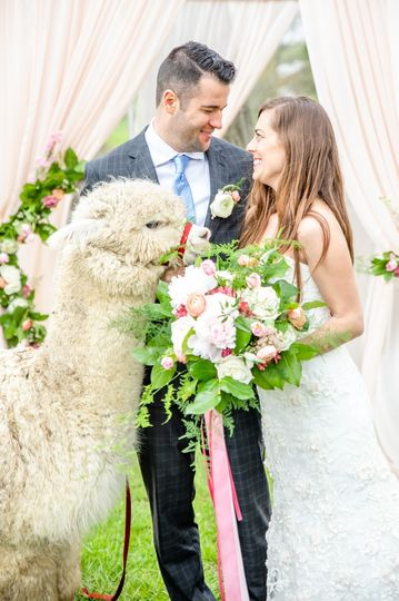 Elegant wedding with alpacas