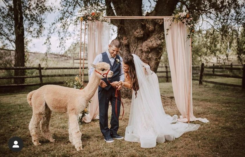 Bride and groom with alpaca