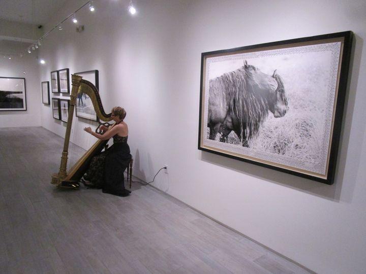 Tmx 1452998401657 The Elegant Harp Forre Gallery  Lake Worth wedding ceremonymusic