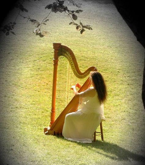 harp91draftimage3