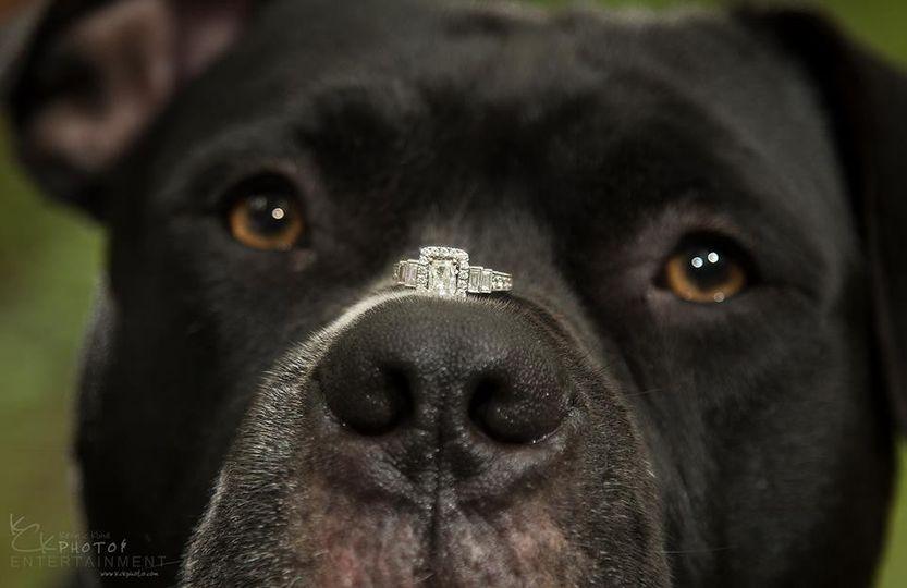 dog ring 51 58417 1560782779
