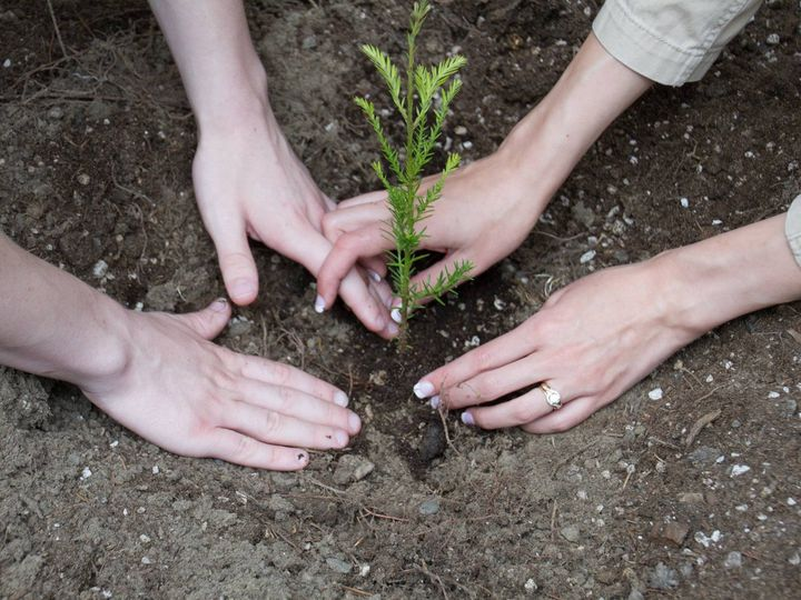Tmx 1457484400640 Treeplanting2 Bellevue, WA wedding officiant