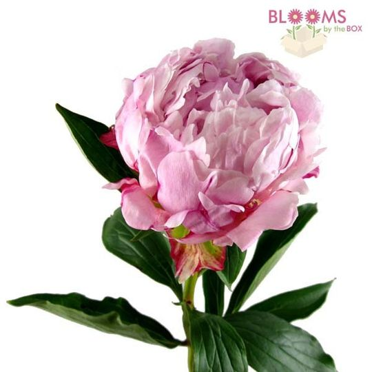 Wedding Flowers Reviews: Blooms By The Box Reviews & Ratings, Wedding Flowers, New