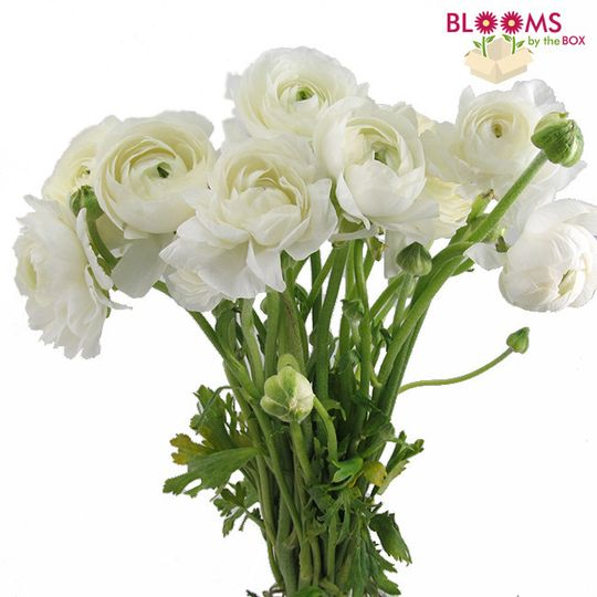 800x800 1413915983412 bunch of white ranunculus