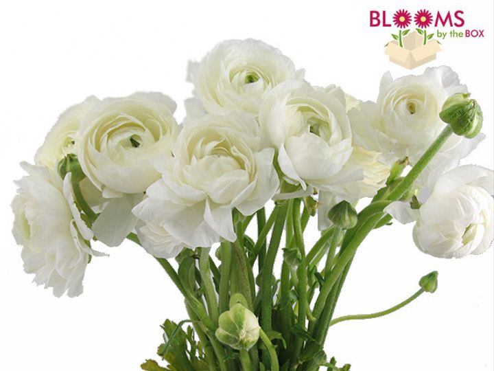 Tmx 1413915983412 Bunch Of White Ranunculus Watchung, New Jersey wedding florist