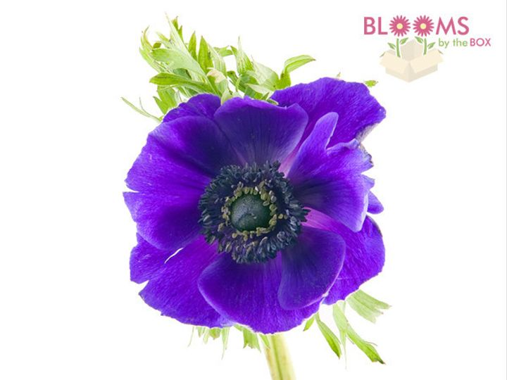 Tmx 1413916439538 Purple Anemone Watchung, New Jersey wedding florist