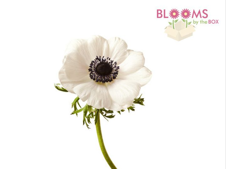 Tmx 1413916444954 White Anemone Watchung, New Jersey wedding florist