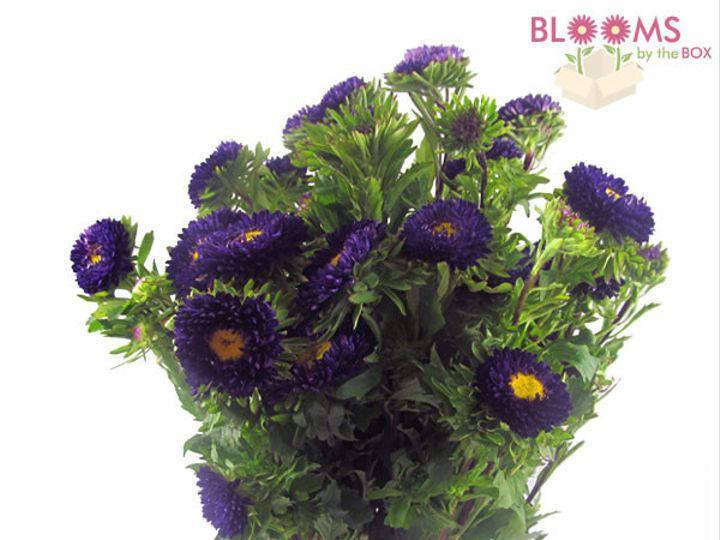 Tmx 1413916525959 Matsumato Aster Purple Watchung, New Jersey wedding florist