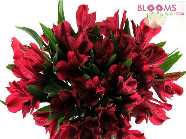 Tmx 1413916551916 Red Alstroemeria Watchung, New Jersey wedding florist