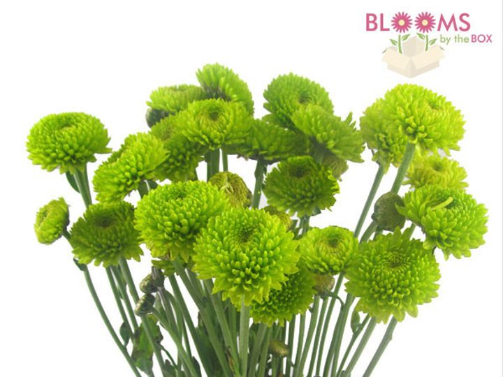 Tmx 1413917263260 Green Pompon Buttom Watchung, New Jersey wedding florist