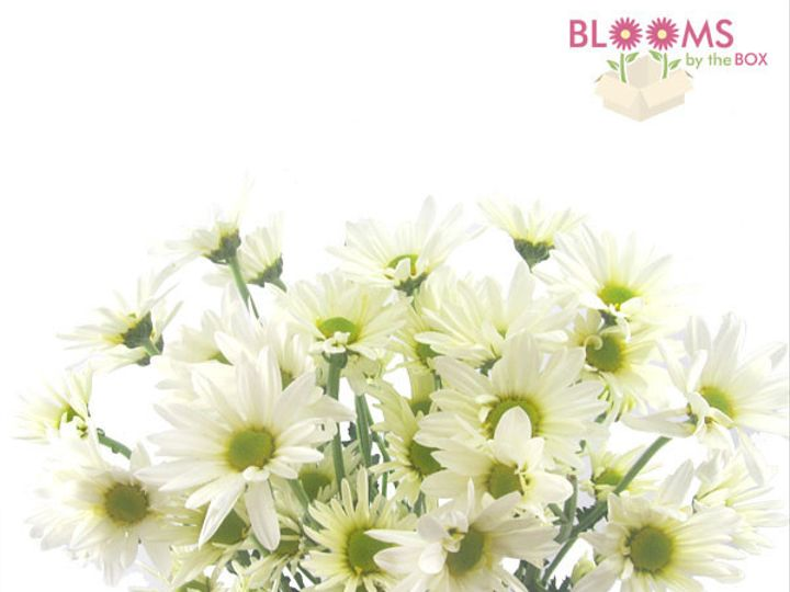 Tmx 1413917277325 Pompon Daisy White Watchung, New Jersey wedding florist