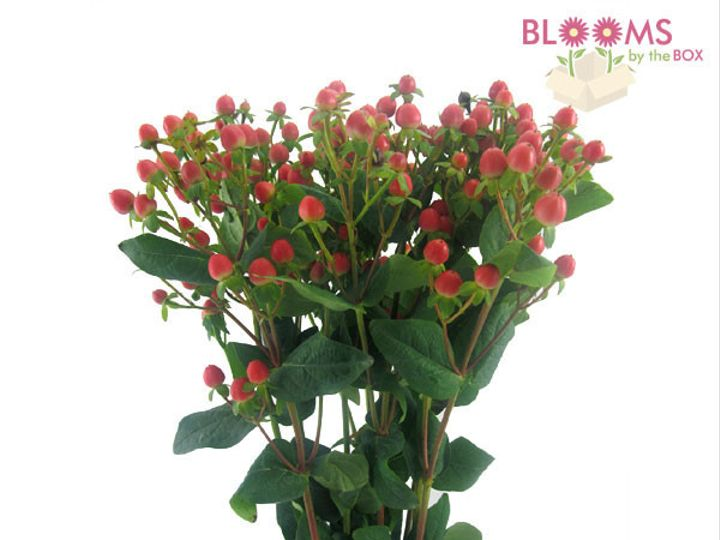 Tmx 1413917385084 Hypericum Red Watchung, New Jersey wedding florist