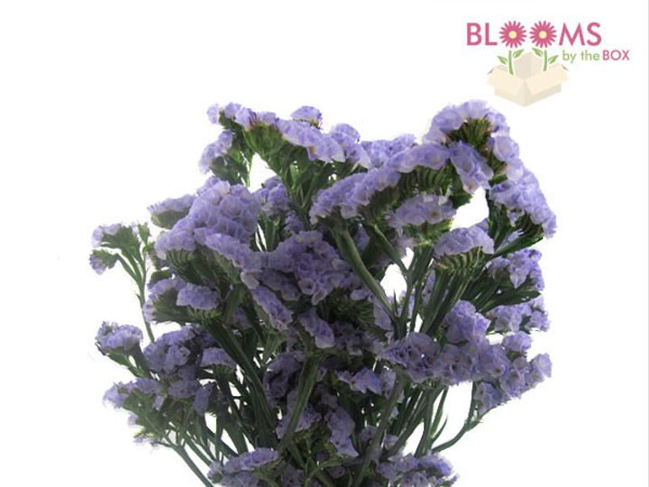 Tmx 1413917391461 Lavender Statice Watchung, New Jersey wedding florist