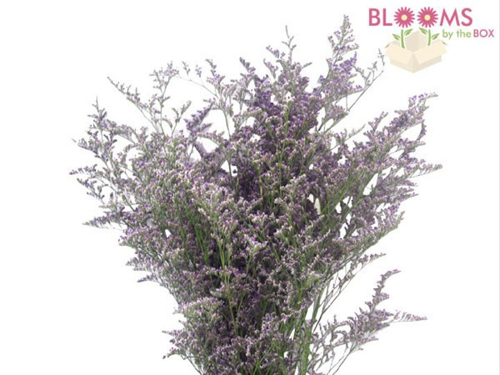 Tmx 1413917393784 Misty Blue Limonium Watchung, New Jersey wedding florist
