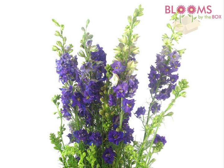 Tmx 1414514250245 Purple Larkspur Watchung, New Jersey wedding florist