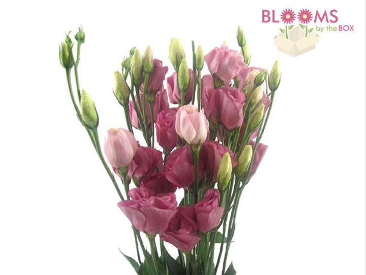 Tmx 1414514385957 Lisianthus Pink Watchung, New Jersey wedding florist