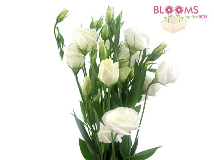 Tmx 1414514390311 Lisianthus White Watchung, New Jersey wedding florist