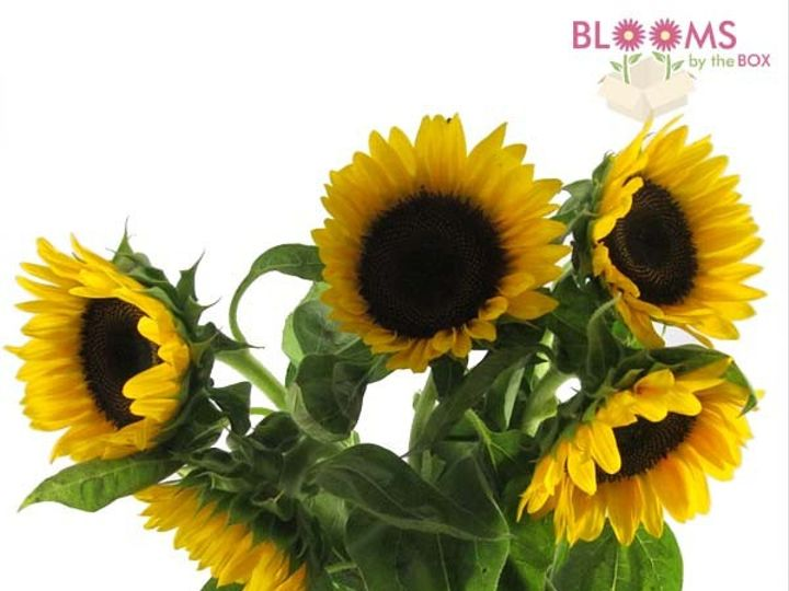 Tmx 1414514451686 Black Center Sunflower Watchung, New Jersey wedding florist
