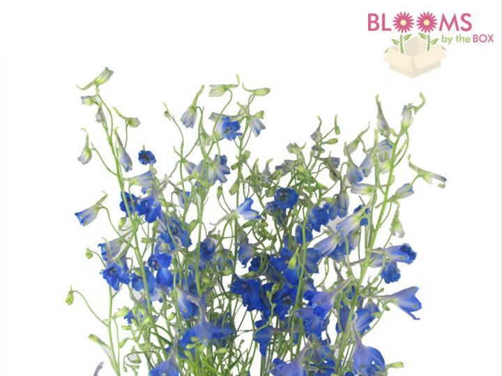 Tmx 1414514456694 Blue Delphinium Watchung, New Jersey wedding florist