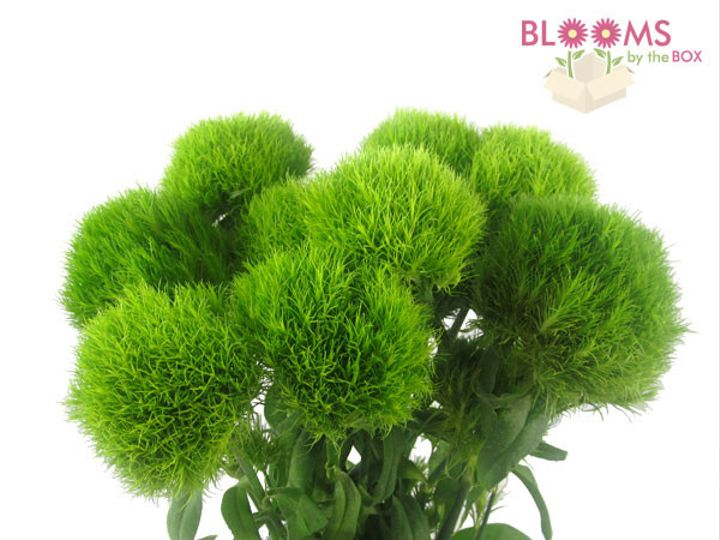 Tmx 1414514460454 Dianthus Watchung, New Jersey wedding florist