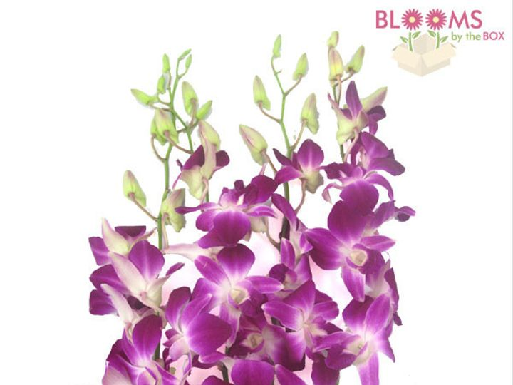 Tmx 1414514504310 Bombay Dendrobium Orchids Watchung, New Jersey wedding florist