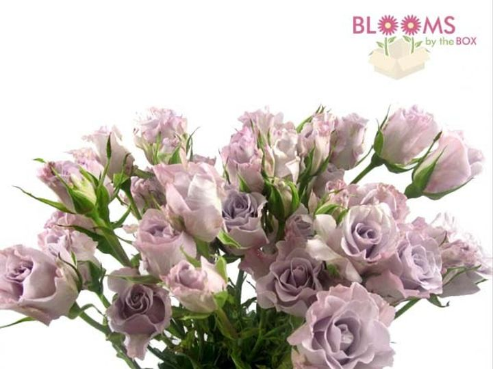 Tmx 1414514673404 Spray Rose Lavender Bunch Watchung, New Jersey wedding florist