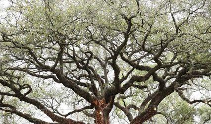 Oak Tree Manor Weddings
