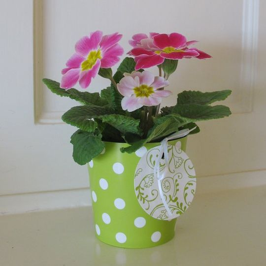 Thinking of using simple potted plants as party favors?Dress them up in CathysWraps and add a...