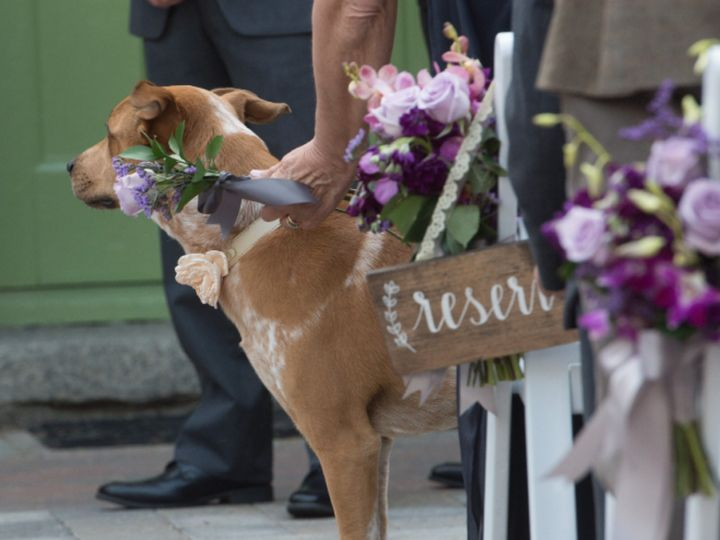 Tmx 1467408667836 Chair Adornments With Puppy Danvers wedding florist