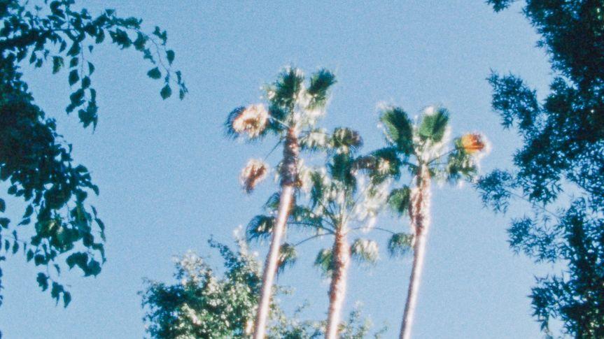 palm trees83