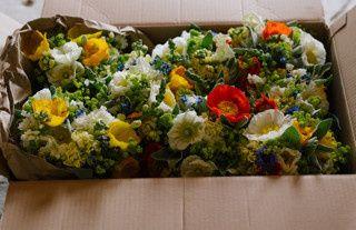 Tmx 1478085436913 Bridesmaids 6.11.16 Bowdoinham wedding florist