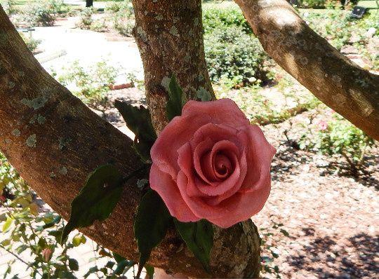 Tmx 1425521681000 Rose In Tree Orlando wedding cake