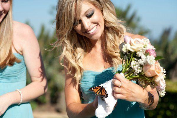 48997d23d8d676a3 1314042122801 butterfly
