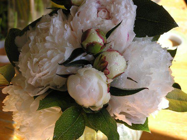 Tmx 1169151075872 Flower13 Delaplane wedding florist
