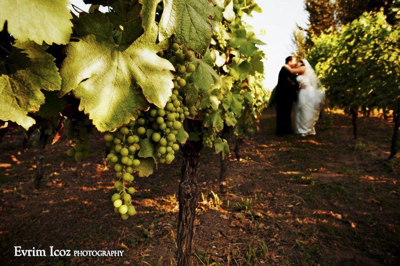 The Vineyard at McMenamins Edgefield