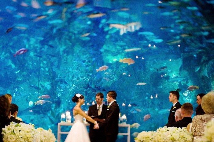 Tmx Seattle Wedding Aquarium Venue 700x466 51 1925727 158164161772420 Veradale, WA wedding travel