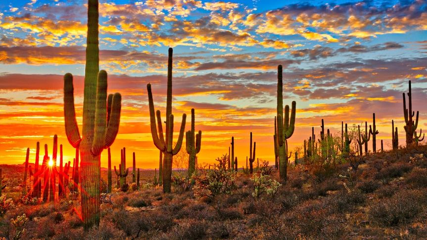Sunset in the Sonoran Desert