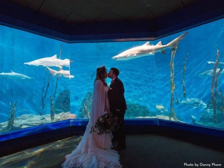 Newlywed kisses among the sharks