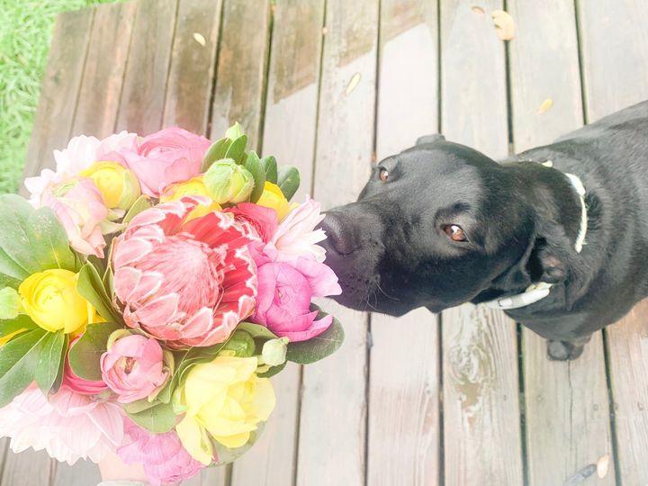 Tmx Img 3679 51 1975927 159422638892190 Mesquite, TX wedding florist