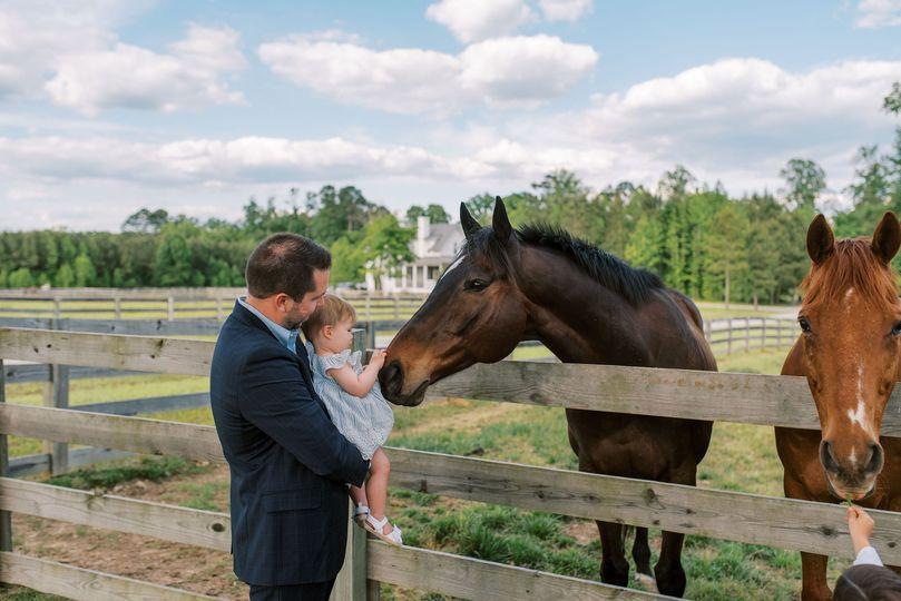 Equine guests