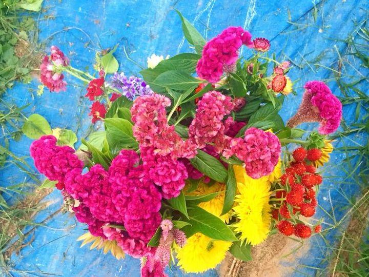 Tmx 38885447 297250570827954 4971367277241827328 N 51 178137 Poolesville, MD wedding florist