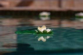 John Fountain Photography