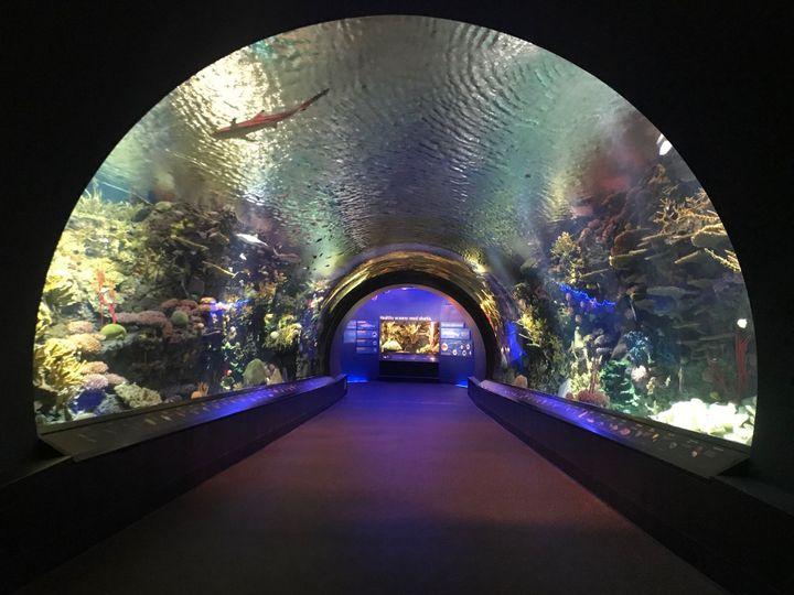 Shark tunnel