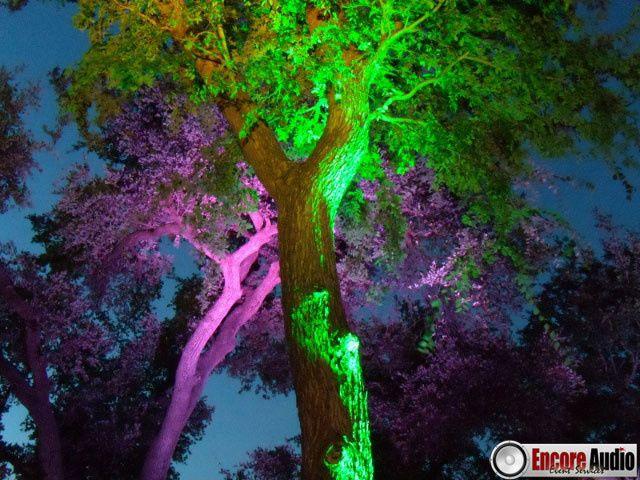Tmx 1452214758074 Tree Uplighting Pittsfield wedding rental
