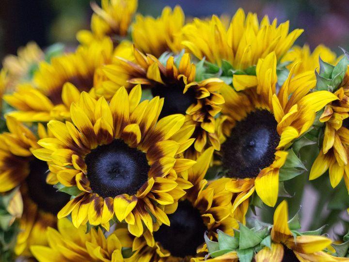 Tmx 1388182453973 Zupans Bravo Live 2013  Lake Oswego, OR wedding florist
