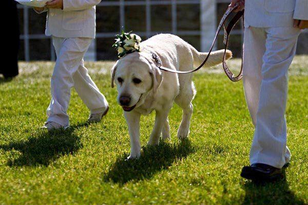 Tmx 1316710644751 Weddingdetailsdog Boulder wedding planner