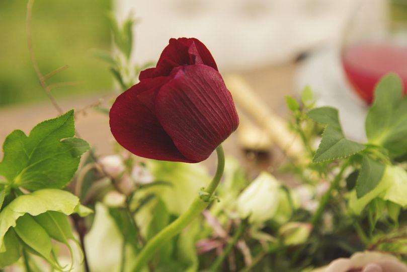 Rose | Redandfawn.com