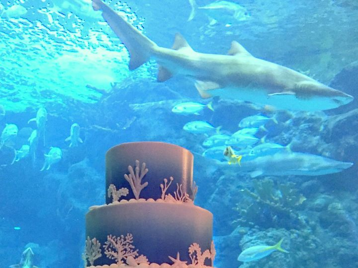 Tmx 1516746224 Aaf204a51c2aeacd 1516746222 78ad403089281afd 1516746221651 7 Aquarium Ombre  Bu Saint Petersburg, Florida wedding cake