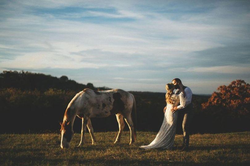 In a horse field